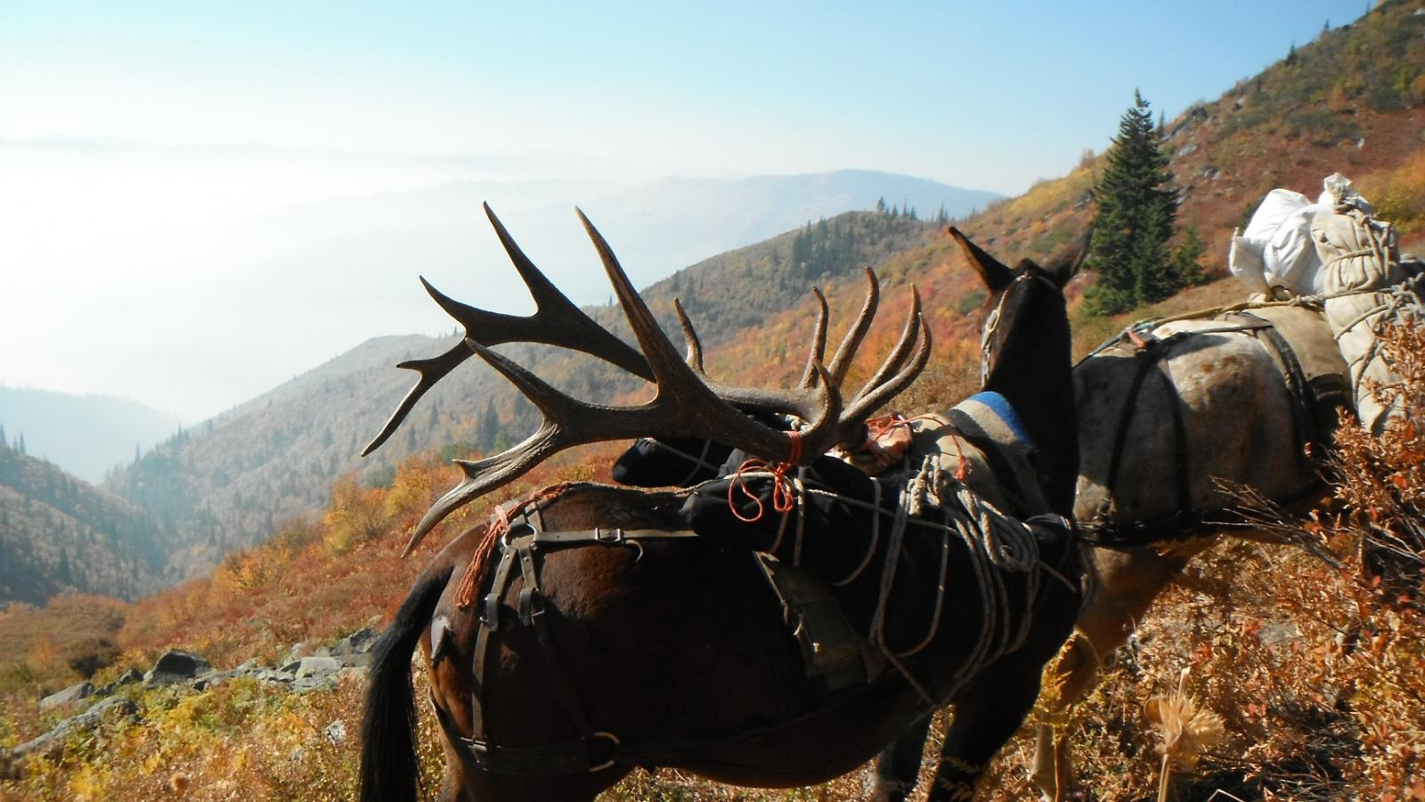 backcountry bull